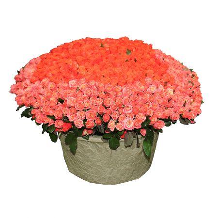 Bouquet 1001 coral rose