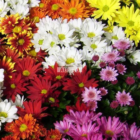 Bouquet Variety