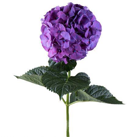 Bouquet Hydrangea purple piece