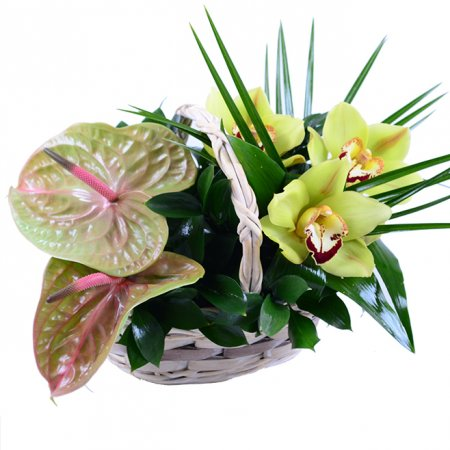 Bouquet Easier breathing