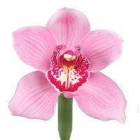 Bouquet Orchid pink piece