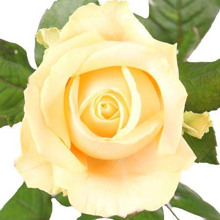 Bouquet Peach Avalanch Piece