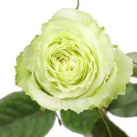 Bouquet Premium rose Lemonade by piece