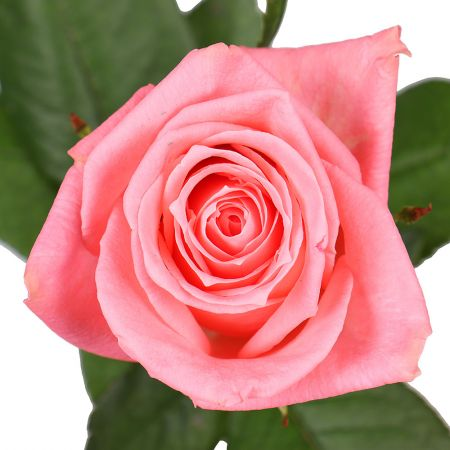 Order beautiful bouquet of pink roses in the online store